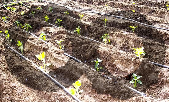 kompostavimo imone